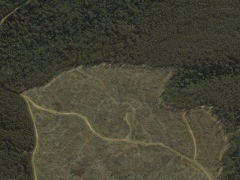 Deforestation in Tasmania