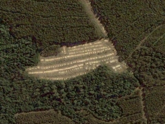 Deforestation in Tasmania 6 (Pollution) - cache image