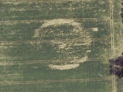 Crop circle remain (Crop circle)