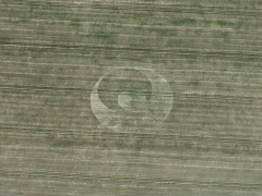 Southend-on-Sea Crop circle (Crop circle)