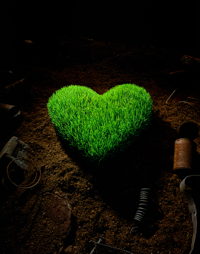 Heart forrest (Look Like) - similarity image