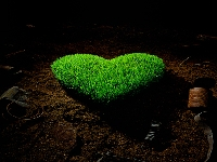 Heart forrest (Look Like) - similarity