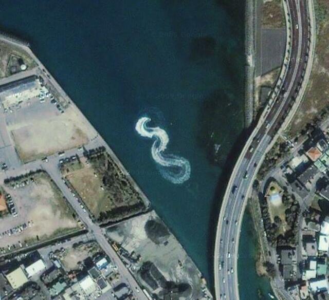 Sea Snake Animals Strange Google Earth Maps