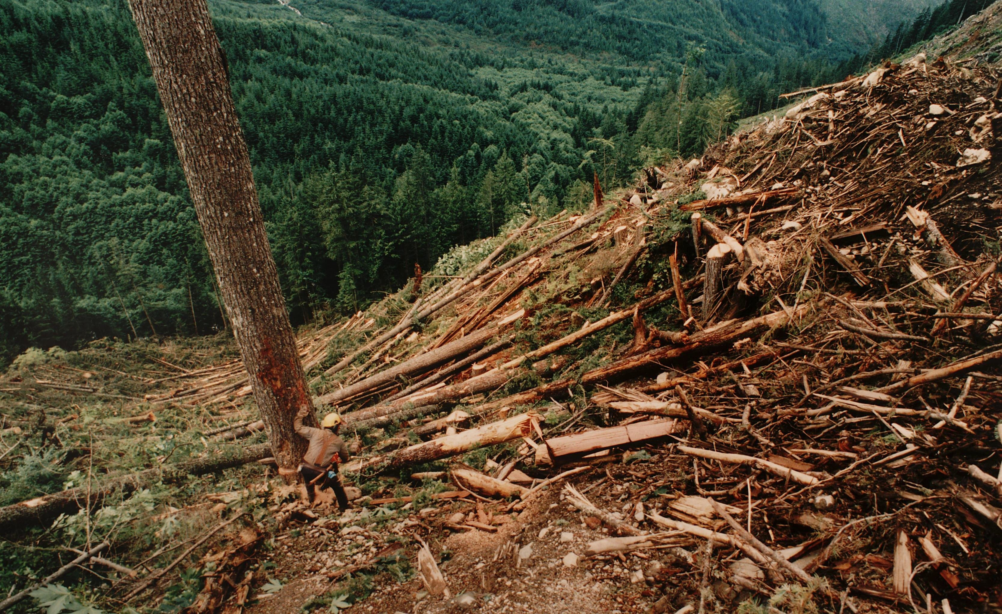 deforestation and pollution Air pollution deforestation and illegal logging inadequate wastewater treatment and flood management facilities sites for disposing of urban waste are limited.