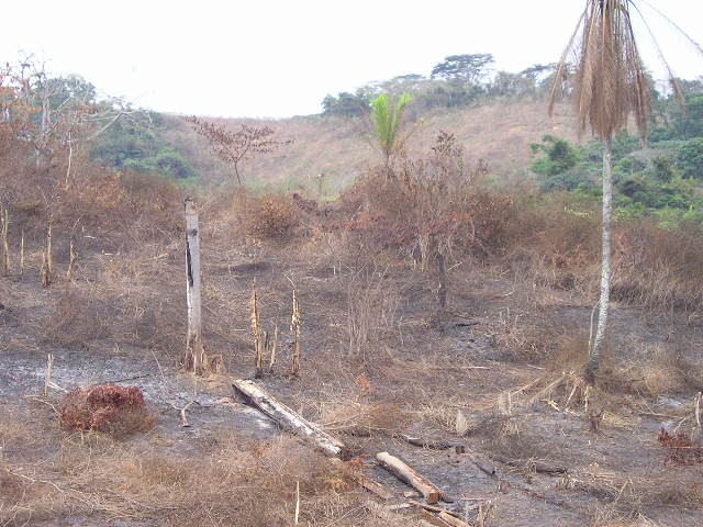 Deforestation in Malaisia 2 (Pollution) - similarity image