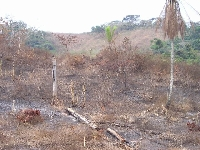 Deforestation in Malaisia 2 (Pollution) - similarity