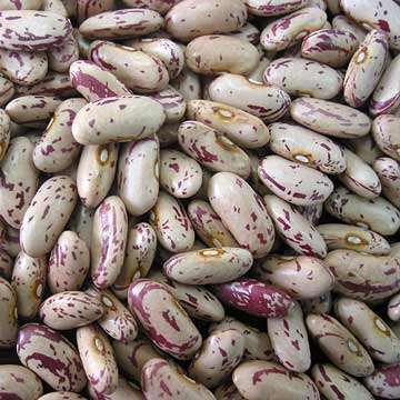 Tennis bean (Look Like) - similarity image