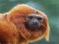 Monkey profil (Look Like) - similarity