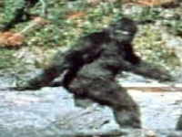 Big foot (Record) - similarity